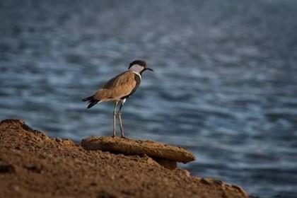 Фестиваль наблюдения за птицами