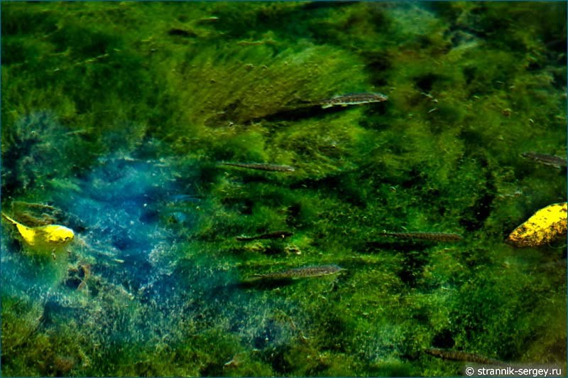 Реки в аликанте отзывы